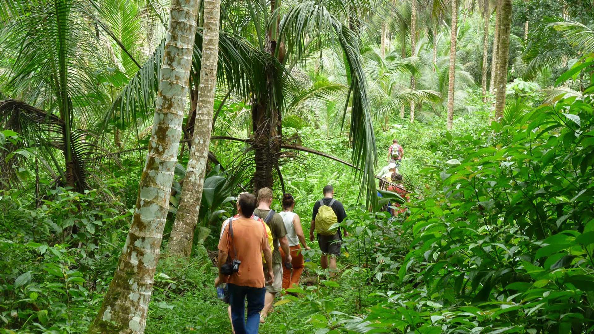 Dschungelwanderung Los Haitises